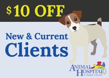 Animal Hospital of Chetek Animal Hospital North Rice Lake Veterinarian Save 10 dollars